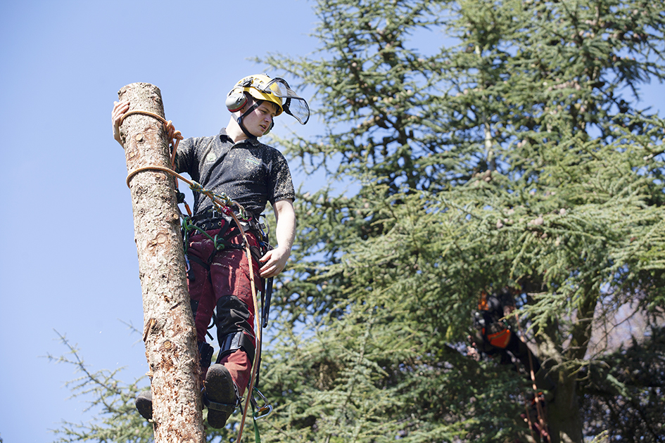 Bicton College Arboriculture student climbing a tree